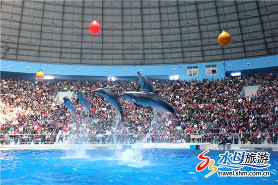 蓬莱海洋极地世界。海豚腾空